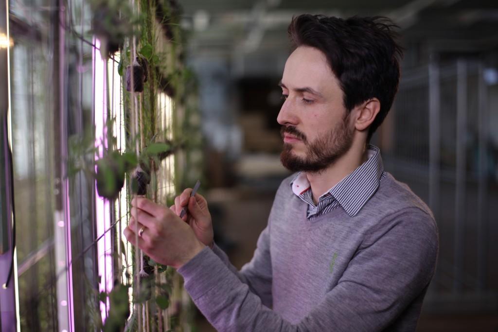 Philipp Förster füllt Anzuchtblöcke aus Steinwolle mit Pfefferminzstecklingen